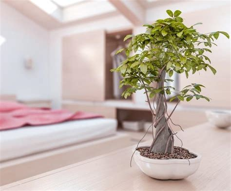 feng shui plants in bedroom top 5 ways to bring feng shui into your cleaning