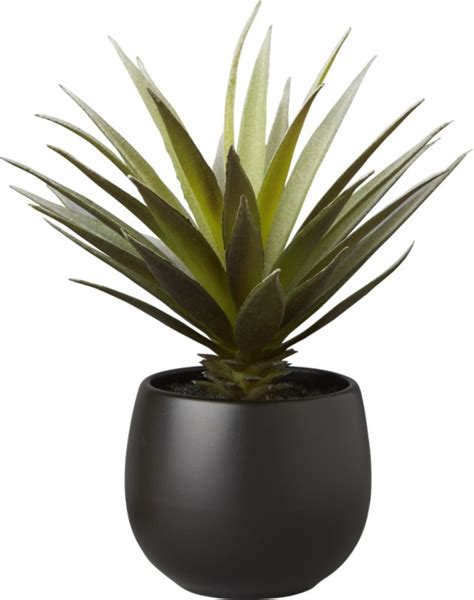 Home Theater Decor Ideas Potted Succulent With Black Pot Shopswell