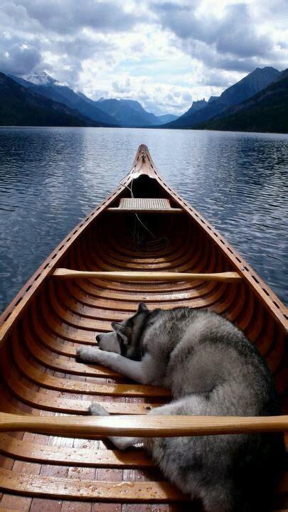 dog on boat to europe dog husky lake landscape boat solitude sailing canoe