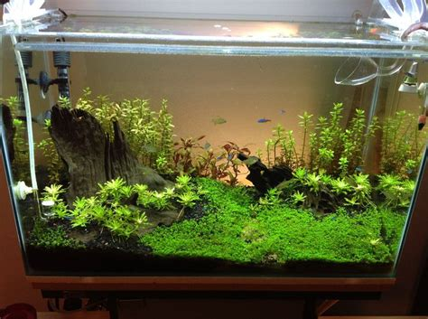 best substrate for aquascaping 1000 images about aquascape on pinterest underwater