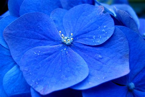 pin by linda cordell on blue pinterest