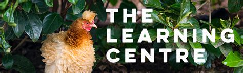Backyard Chickens Melbourne by Chicken Coops For Sale Sydney