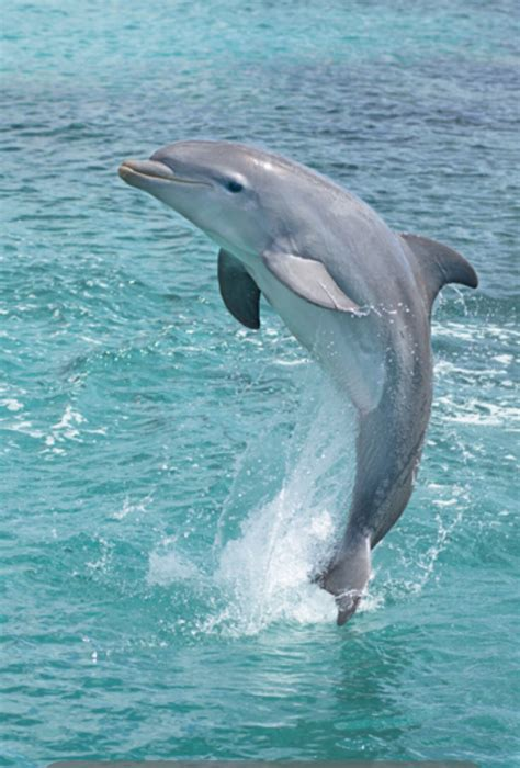 Beauty in the wild | *Dolphins | Pinterest | Animal, Ocean ...