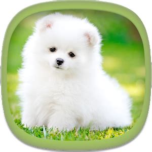 cute puppy wallpapers android apps on google play