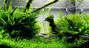 freshwater aquascape a guide to aquascaping the planted aquarium