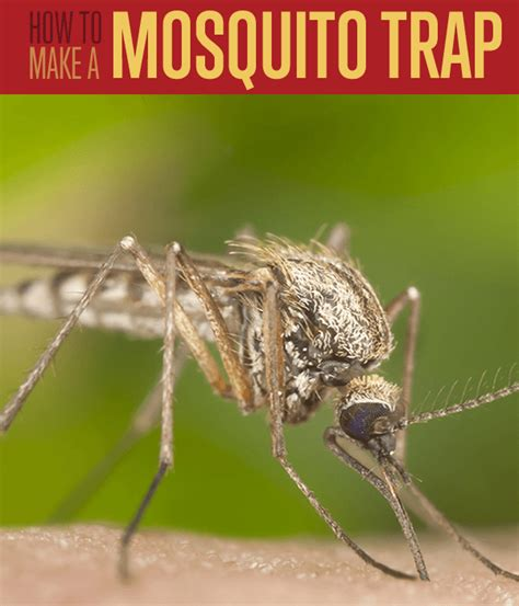 how to get rid of mosquitoes guaranteed simple and homemade mosquito trap diy projects craft ideas how to s