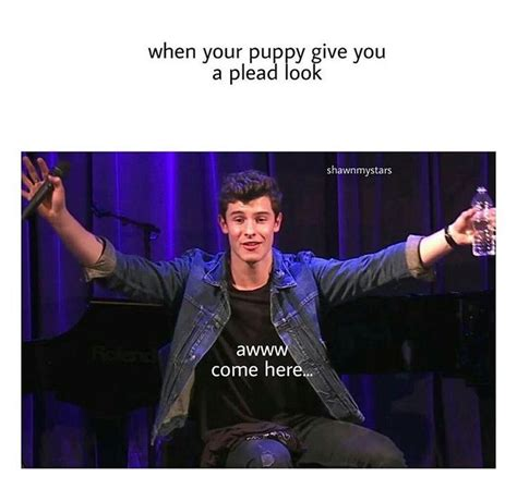 crazy shawn mendes 2269 best images about shawn mendes on pinterest muziek
