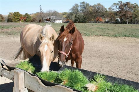 fodder definition what do horses eat