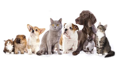dogs and cats and cat populations are approaching human numbers