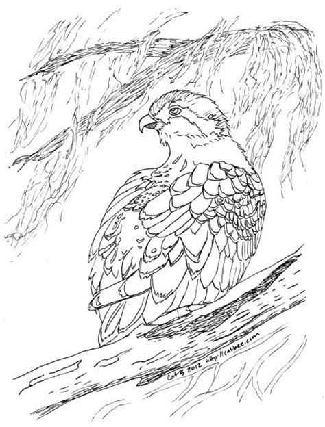 osprey coloring pages sketch coloring page