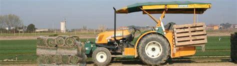 costo tappeto erboso costo prato a rotoli erba a rotoli prezzi costo tappeto