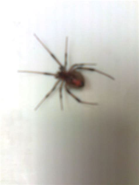 spider in my bed bed spiders 28 images image gallery spider bedspread