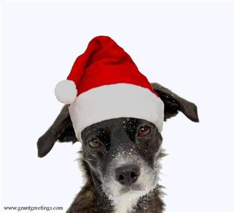 merry christmas dog  santa hat  merry christmas wishes ecards