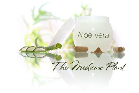 aloe vera facts 100 aloe vera plant facts aloe vera juice benefits