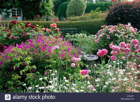 cottage garden roses eastgrove cottage garden nursery worcestershire front