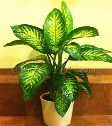 piante verdi da interno pianta da appartamento verde duylinh for