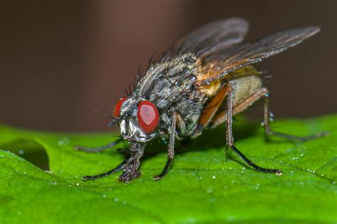 prevent flies from spreading germs with pest control service