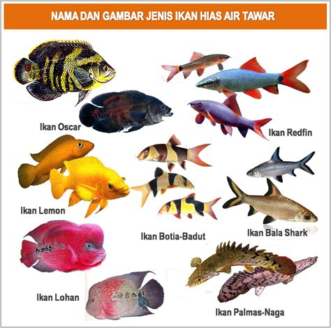Foto Dan Lu Hias nama dan gambar ikan hias air tawar gambar ikan hias
