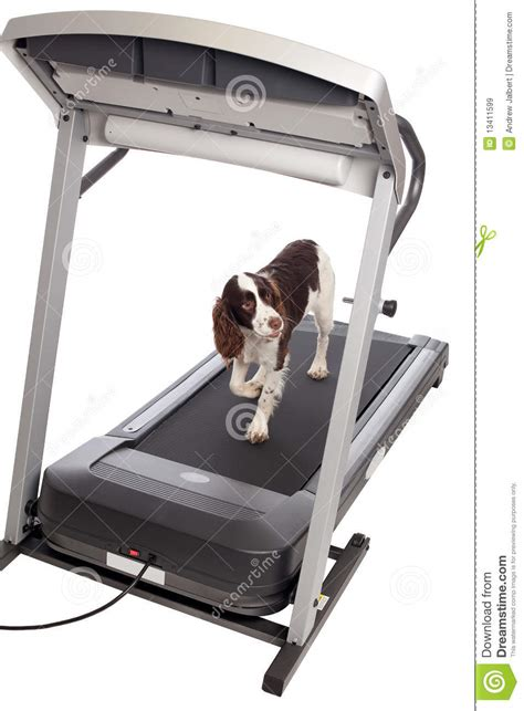 pug on treadmill on treadmill royalty free stock images image 13411599