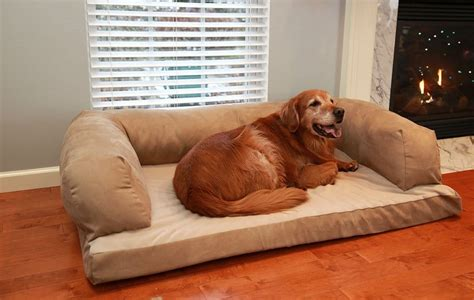 huge dog on couch review beasley s couch dog bed dogs recommend