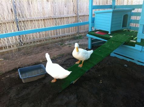 diy duck house plans 10 diy chicken feeder and waterer plans and ideas the poultry guide