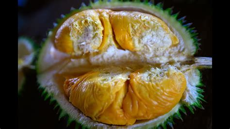 bao sheng durian farm durian tasting  bao sheng