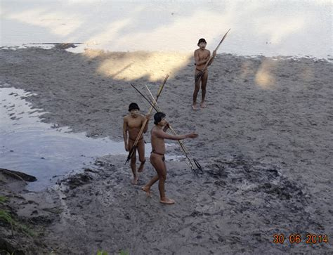amazon tribe some isolated tribes in the amazon are initiating contact
