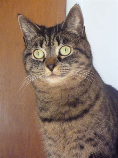 Set Ami Cat my kitties ami and rini lovelyduckie s weblog