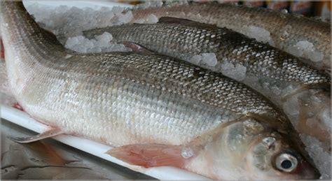 fresh fish house fresh fish house detroit mi whitefish freshfishhouse fresh fish house michigan 187