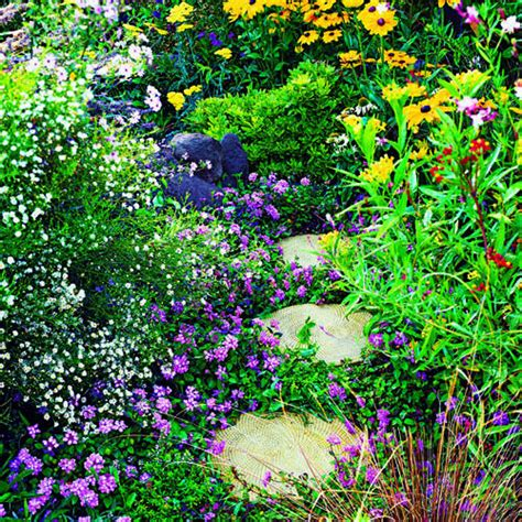 Butterfly Buffet Sunset Butterfly Flower Garden