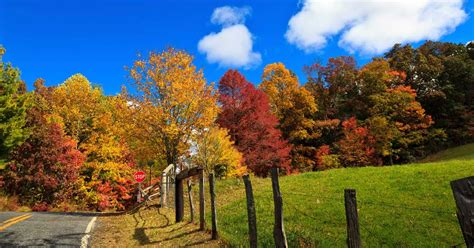 color trees 8 trees and shrubs for brilliant autumn color next avenue