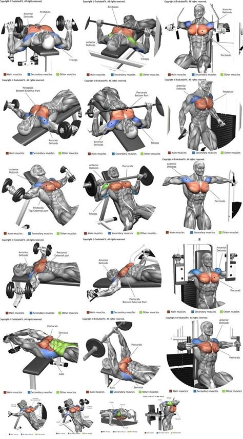 workout experiences chest triceps biceps shoulders back legs abs others workout