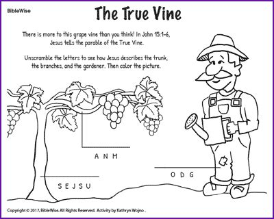 Coloring Page Vine And Branches by The True Vine Jesus Parables Korner Biblewise