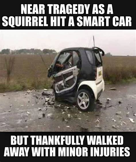 smart car deer pictures of the day 43 pics