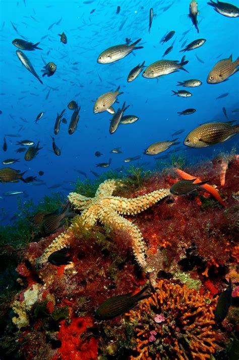 imagenes de unicornios marinos fotos fondo marino imagui