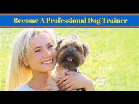 professional dog trainer work