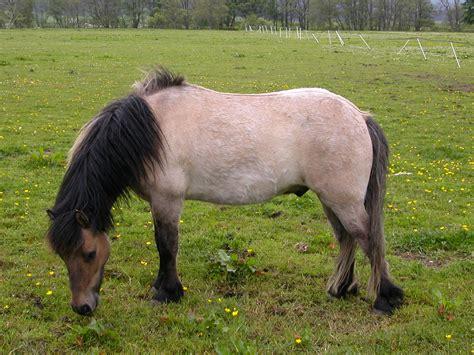 horses for sale uk breitling horses for sale uk wroc awski informator