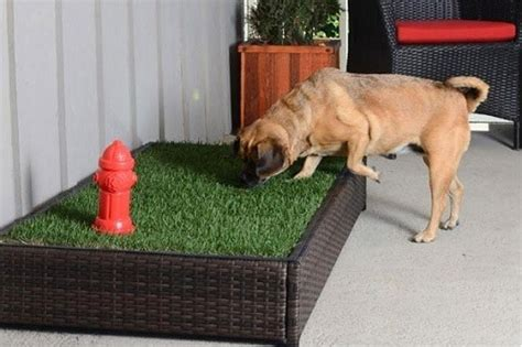 puppy grass pad should you use a grass pad for your pet bestfakegrasses