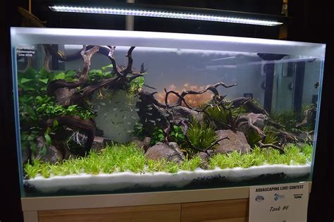Aquascape Chicago Aquascaping Live 2016 Large Tank Entries Amp Results