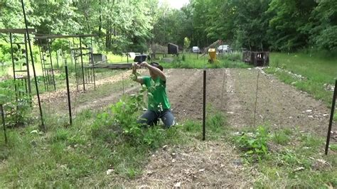 tying up grape vines growing fire wood pile youtube