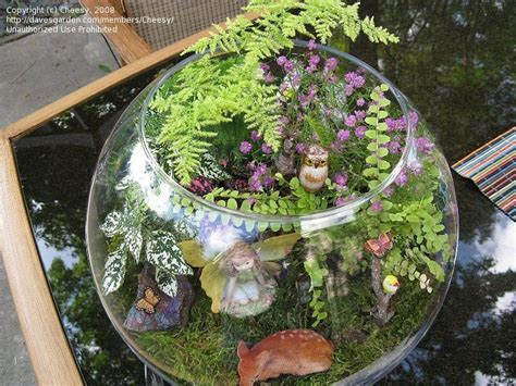 Terraria Gardening by Specialty Gardening I Made Another Terrarium Today