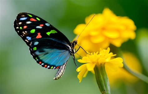 imagenes de mariposas national geographic butterfly release articles easy weddings