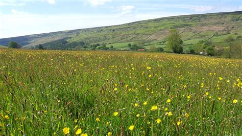 rosedale s mini meadow part 1 the official blog for the north york moors national park