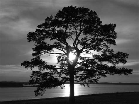 imagenes en blanco y negro de un paisaje paisajes de ensue 241 o paisajes blanco y negro