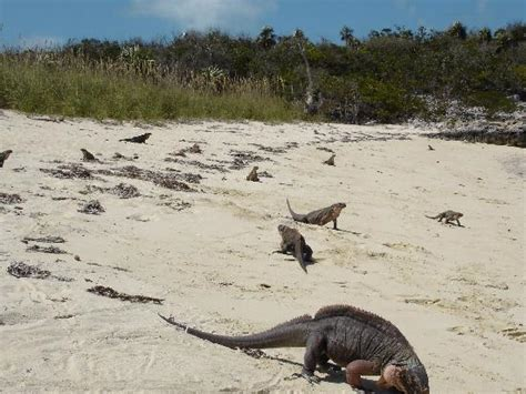 Iguana Island | rolleville beach picture of great exuma out islands