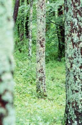 kopersulfaat mos wat kills korstmossen mos op de bomen struiken