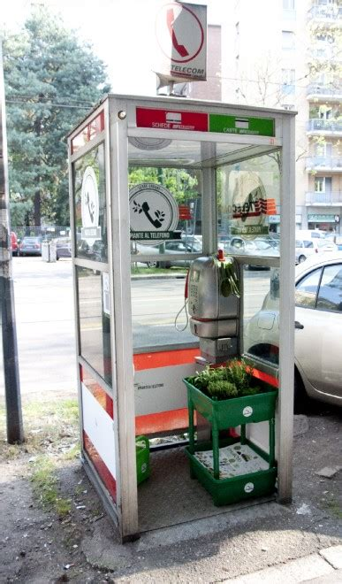 cabine telefoniche roma piante al telefono se le cabine telefoniche diventano