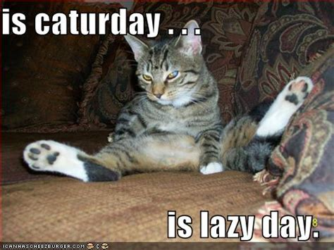 Caturday Meme - image 181607 caturday know your meme