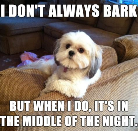 Dog Barking Meme - training archives the how to dog blog