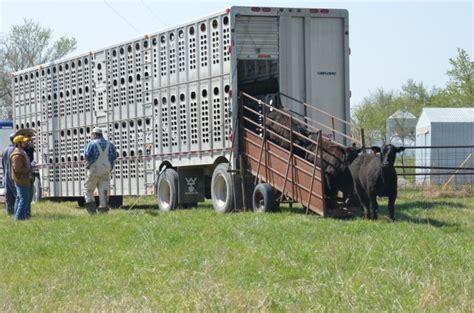 merck animal health enhances creatingconnections program releases  cattle handling video